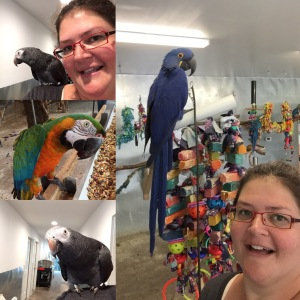 Me at my volunteer gig. The inspiration for A Letter To The Person Wanting To Buy A Bird