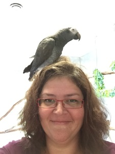 Dunkin. The sneaky Timneh African Grey who makes you think all the birds will be just as sweet